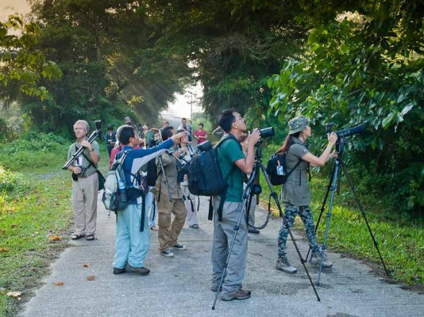 Guided early birdwatching walk by Borneo Bird Club