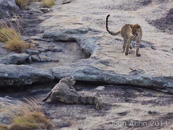 Sri Lanka Leopard and Crocodile @ Yala National Park