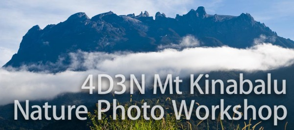 4D3N Nature Photography Mount Kinabalu Borneo Workshop