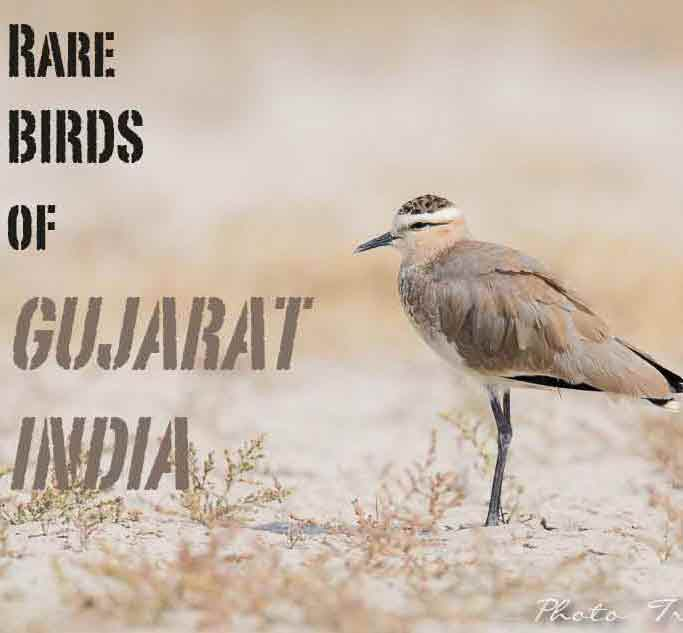 3rd Global Birdwatcher's Conference Kutch Gujarat India