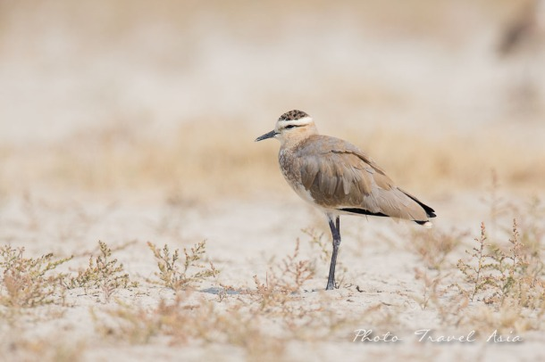 Birding and photographing Birds in Kucth Gujarat, India