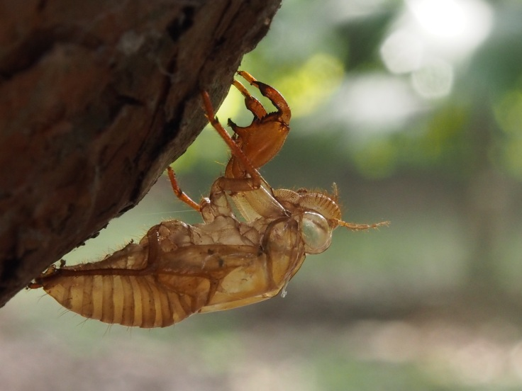 Cicada skin By Brenda.