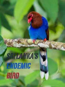 Bird watching, bird photography Sri Lanka