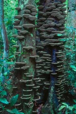 Fungi Nature PHotography SIngapore--3
