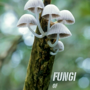 Photographing Fungi in Rainforest of South-EastAsia.