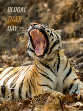 Global International Tiger Day 29 July