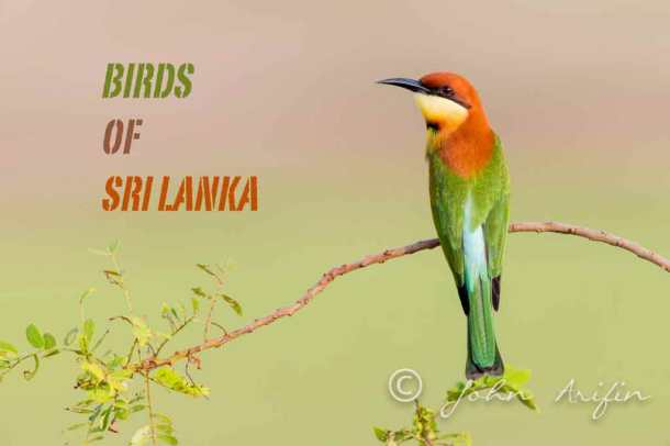 Bird watching, bird photography Sri Lanka