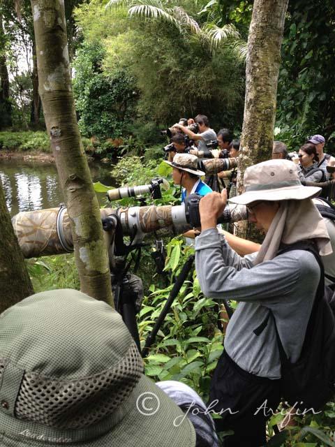 Blue-eared Kingfisher @ Singapore Zoo
