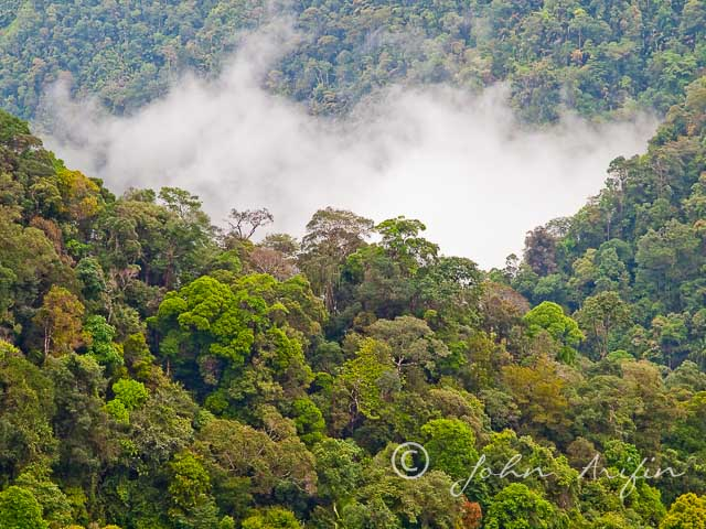 Kubah National Park, Sarawak, Borneo