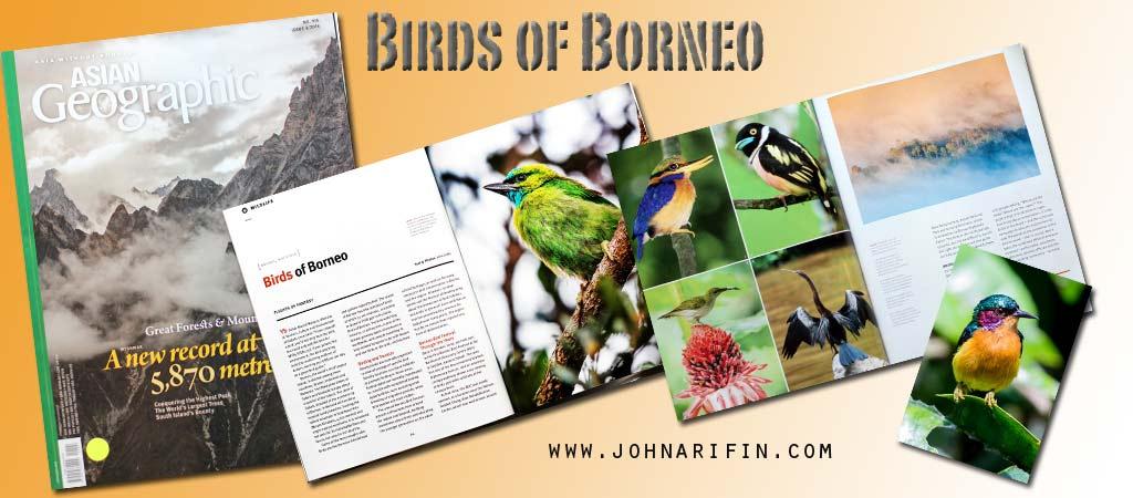 Asian Geographic Birds of Borneo