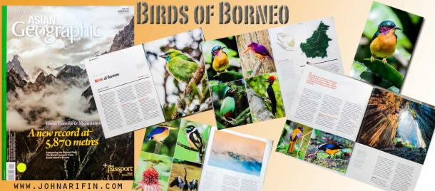 Birds of Borneo, Asian Geographic Magazine 2014