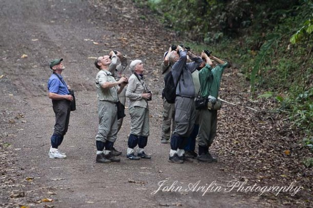 Bird of Borneo Bird Watching in Danum Valley Sabah