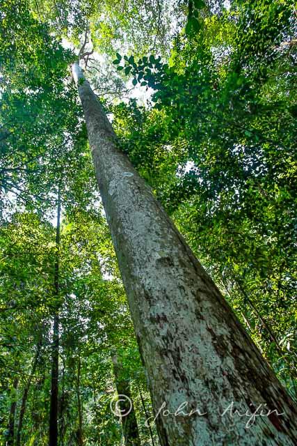 Rainforest-20