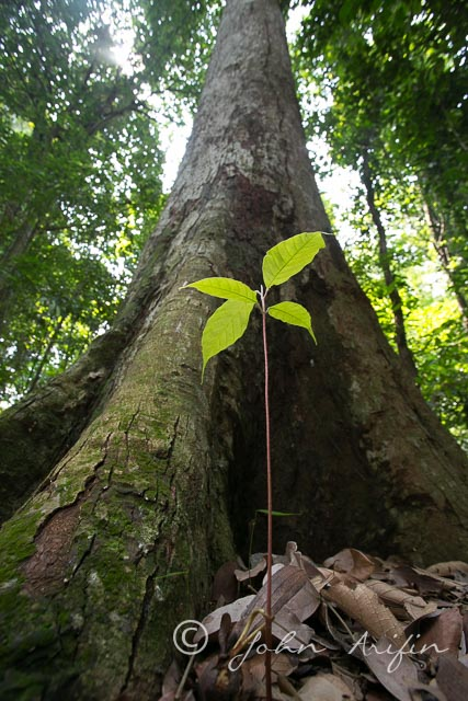 Rainforest-23