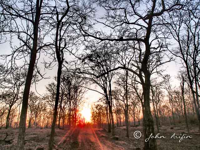 Tigers of India. Sunrise in tiger country