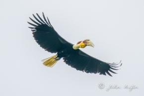 Birding Khao Yai National ParkThailand
