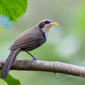 4D3N Bird Photography Trip to Ganeshgudi, Karnataka, Western Ghats India.