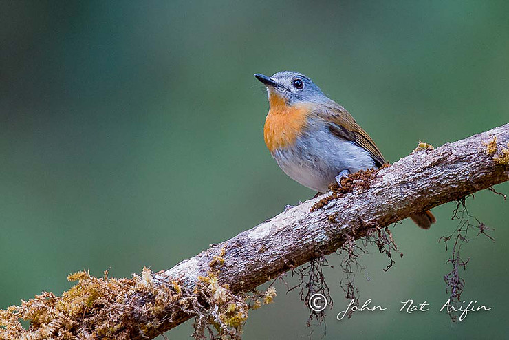 4D3N Bird Photography Trip to Ganeshgudi, Karnataka, Western Ghats India