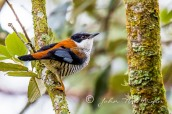 Endemic birds of Vietnam in Dalat