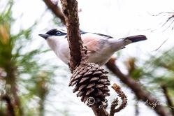 Endemic birds of Vietnam in Dalat