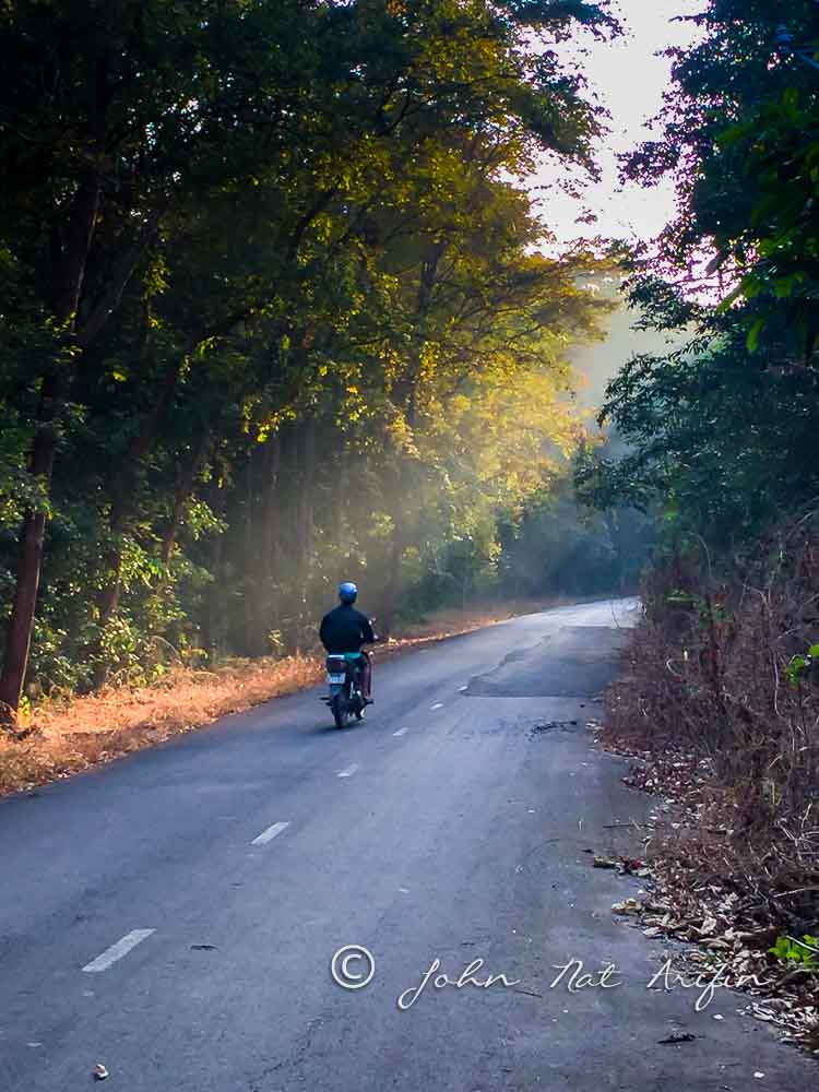 The mists evaporated from the humid forest ground as the shafts of light poured onto the country road near Tan Phu (not far from Cat Tien National Park) in southern Vietnam. We were ready in the hide by 7 am every morning to photograph the birds.