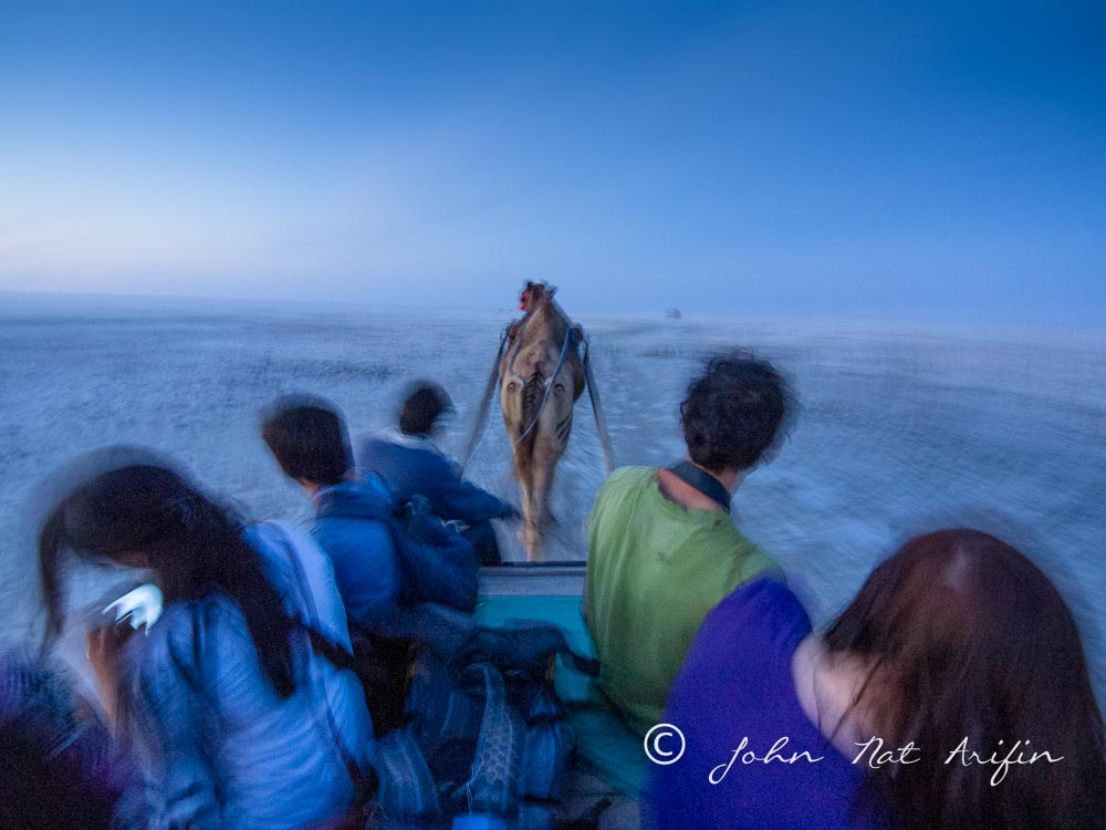 Sunset Camel Cart ride in greater Rain of Kutch. Photographing Birds In Gujarat|Kutch District|India