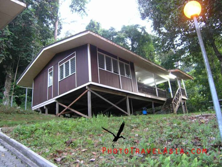 15 Day birding Sarawak Borneo
